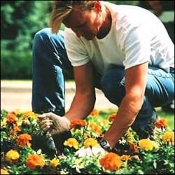 gardener image